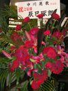 Flowers_tatsumi
