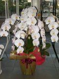 Flower_cho