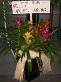 Flower_tatsumi