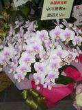 Flower_watanabe