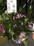Flowers_kosakai_2