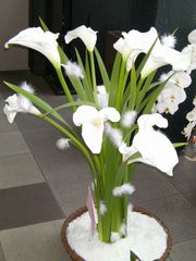 Flower_anms01