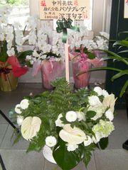 Flower_pasona01